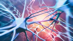 нероны